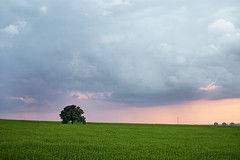 Arbol-Solitario  [Explore] (PUAROT) Tags: sunset españa verde luz arbol atardecer photography sevilla spain nikon d70s ciudad colores cielo nubes fotografia naranja solitario montequinto 3518 puarot