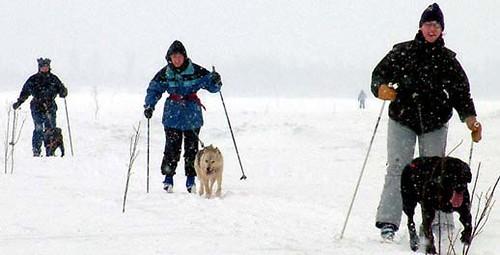 Skijoring en Grandvalira