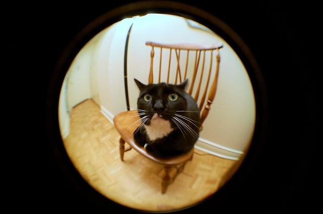 Cat through fisheye