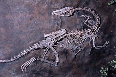 makoshika dinosaur museum