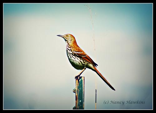Perched by Nancy Hawkins