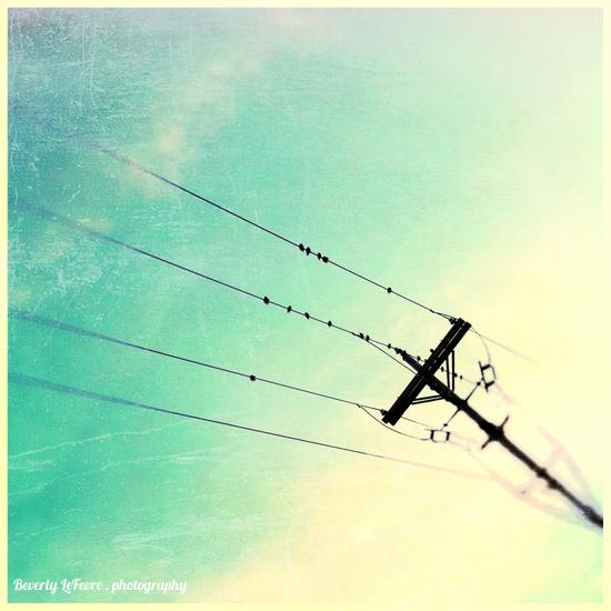 birds on lines