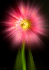 Flower Power ! (Smoqu) Tags: pink flower macro nature exposure power dynamic fast explore effect zooming focal lenght smoqu