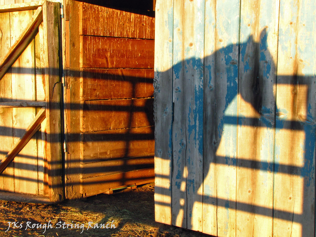 Half of a Shadow Horse