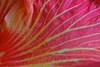 Floral patterns (Deb Jones1) Tags: pink flowers abstract flower macro texture nature floral beauty canon garden botanical outdoors patterns petal hibiscus blooms flickrduel flickrawards debjones1