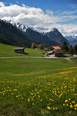 MIttlerspitz (Iestyn Roberts) Tags: switzerland liechtenstein alpineflora mittlerspitz gnalp aplineview swissyellowflowers