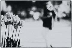 Black And White Beauty In Small Things (Josee Houde) Tags: street city nyc newyorkcity flowers blackandwhite bw blur flower canon blackwhite tulips noiretblanc streetphotography tulip streetview noirblanc streetshot canoneos5dmarkiii 5dmarkiii