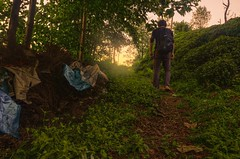 HDR Forest (ImSaidoww) Tags: forest nature natural landscape nikon nikond5100 d5100 nikonphotography hdr green sunset shining light tree walk trekking richtone dslr