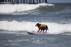 DogSurf_Loews2011_103
