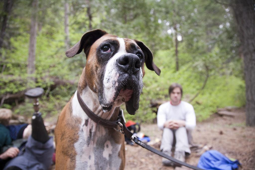 Oscie @ Belknap Campground