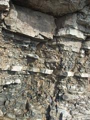 fossil in rock