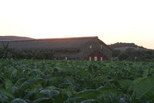 LFD Farm - 45