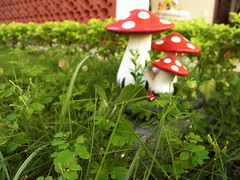 Jardim de v (Letcia Simes) Tags: macro natureza grama jardim cogumelo