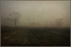Fog on The Meadow (jmason3401) Tags: