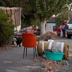 Junk with Cat and Family (Dr Abbate) Tags: street family urban abandoned animals cat square junk suburban pavement sidewalk domestic detritus footpath dumped