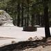 Whitetail Campground #11