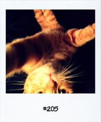 """#DailyPolaroid of 21-4-12 #205 • <a style=""""font-size:0.8em;"""" href=""""http://www.flickr.com/photos/47939785@N05/7115744733/"""" target=""""_blank"""">View on Flickr</a>"""