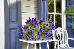 CCporch2_ copy_ copy 2_tonemapped copy (blususan_406) Tags: flowers blue nikon purple porch shutters bb petunias bluemax chesapeakecity d7000