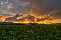 June 23 2012 sunset 2 (Campbell Acres Photography) Tags: top20sunsetsofourhearts