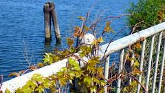 Prince Street Park (mahler9) Tags: plants boston vine jaym mahler9 princestreetpark andantecomodofotos