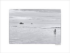 (Peppo17) Tags: cane mare fiume barche manduria taranto canon6d fiumechidro