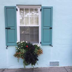 One color of the rainbow. (derekbruff) Tags: flowers blue window southcarolina charleston windowbox iphone rainbowrow iphoneography
