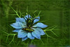"Jade (Diana Thorold.) Tags: art texture psp interesting ie hypothetical 2014 manipulate flamingpear artdigital trolled awardtree dianathorold magicunicornverybest ""exoticimage"" netartii"