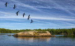 The Lake (Lindaw9) Tags: canada geese sky clouds rock lake treeline september solitude
