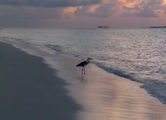 Twilight time at Maldivs mirihi(1) (sapphire_rouge) Tags: atoll   beach island coral resort mirihi sunset watervilla  tolopical lagoon maldives  mirihiisland ngc
