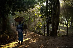 Good Morning Sunshine 02 (Rezwan Razzaq) Tags: road morning winter light shadow wild people sun man tree nature sunshine sunrise way landscape nikon ray forrest path walk wide deep ultra bangladesh dusl gettyimagesbangladeshq2
