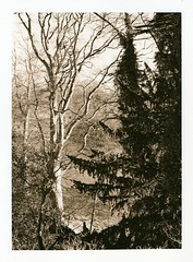 Dryburgh Abbey, Borders (Ivan B Palli) Tags: abbey print scotland kodak lith borders se5 dryburgh moersch bromesko