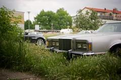 Elsa-Brandström-Straße, Berlin-Pankow (danichtfür) Tags: berlin mercury cougar xr7 1977 70s hkennzeichen karren sony sonyalpha sonynex6 35mm sonye35mmf18oss f18 berlinpankow gwbhabersaath guessedberlin sonyemount