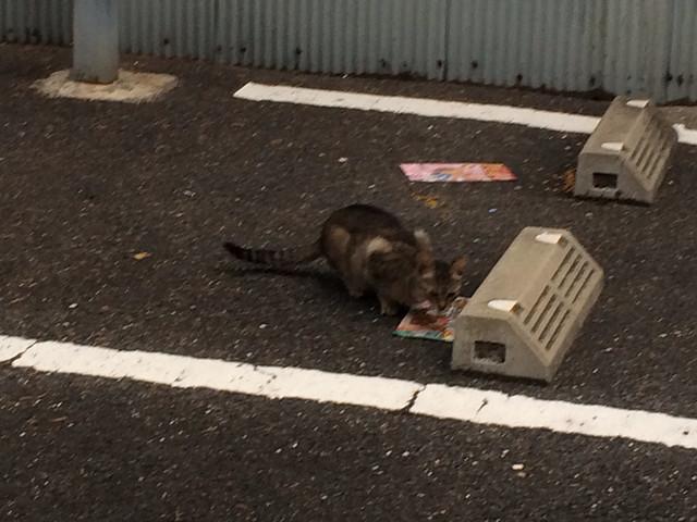Today's Cat@2014-06-23