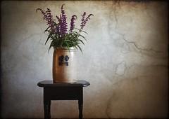 Mexican Sage (ertolima) Tags: stilllife still flowers pot stoneware purple texture layer antique vintage