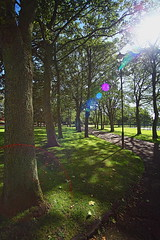 trees in the park (Barry Miller _ Bazz) Tags: victoriaparkwidnescheshire sigma50mmf14 canon5dmark2 openspace widnes