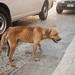 Emaciated Perro