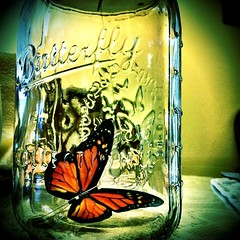 Butterfly in a Jar. (AJRyan6of7) Tags: camera square squareformat normal soemo iphoneography instagramapp uploaded:by=instagram