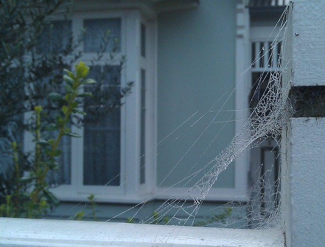 Spider web, Sunday morning