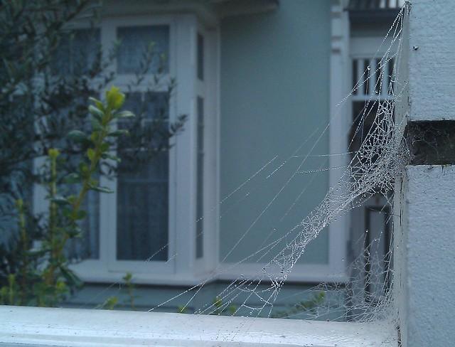 Spider web, Sunday morning