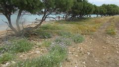 GreeceSD-2671-119