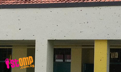 Help! Swarms of buzzing bees make school in Pasir Ris their home