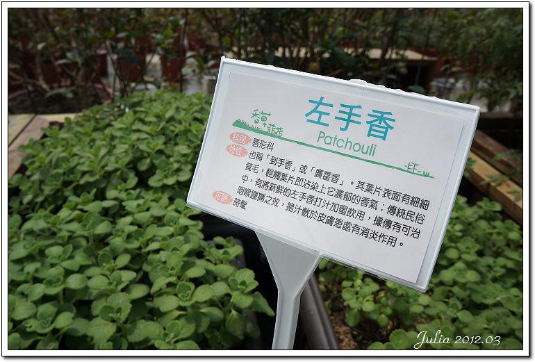 香草菲菲 (3)