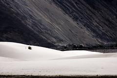 Dunes. (Prabhu B Doss) Tags: india sand nikon dunes valley himalayas ladakh hundar nubra d80 prabhub prabhubdoss zerommphotography 0mmphotography