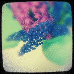 Spring hyacinth bouquet ttv (eg2006) Tags: pink flowers green kitchen floral vintage easter spring blurry soft pretty purple sweet pastel cottage lavender mint kitsch retro fantasy vase dreamy bouquet chic minty grainy blooms jadite tabletop hyacinth creamy glassware iphone hobnail shabby jadeite ttv puddingcamera pixlromatic