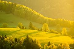 Sun-Kissed ~ Slovakia (Martin Sojka .. www.VisualEscap.es) Tags: morning light tree canon landscape spring bloom slovensko slovakia lightroom 702004 5dii