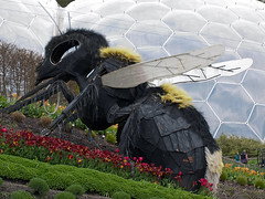 big bee (JmGpHoToS) Tags: edenproject