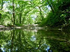 P1000065x (gzammarchi) Tags: italia natura montagna sanpellegrino paesaggio bosco riflesso stagno pozzanghera camminata itinerario rapezzo firenzuolafi