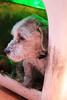Gran Compañero (José Ramón de Lothlórien) Tags: dog puppy amigo casa amor jr perro lucky mascota lamina maltes pelos compañero cariño adulto producciones pelitos lealtad obediencia fidelidad