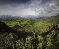 Landscape south of Lalibela (Luc V. de Zeeuw) Tags: agave bush clouds ethiopia landscape mountain northwello amhara