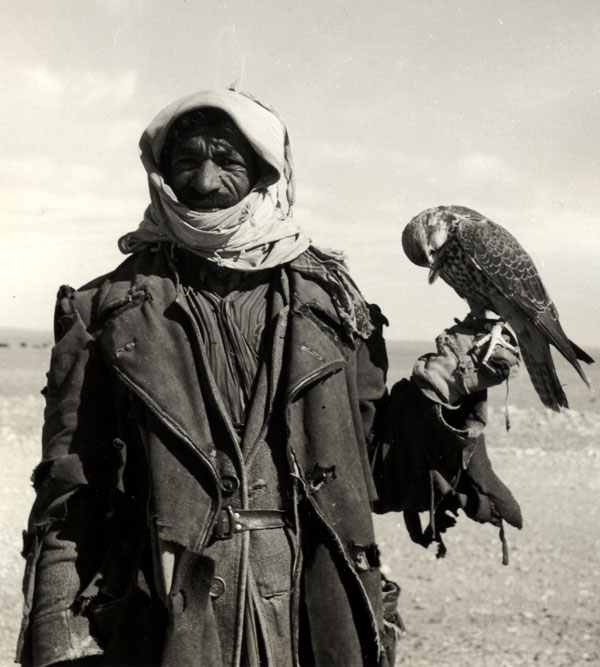 Ruwala (Bedouin) hunter with falcon, Northwestern Saudi Arabia, 1952. Penn Museum image #50202